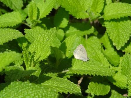 虫2.jpg